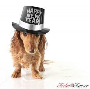 Soaking wet puppy wearing a Happy New Year hat.