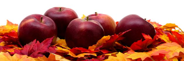 Apple Items We Love for Fall