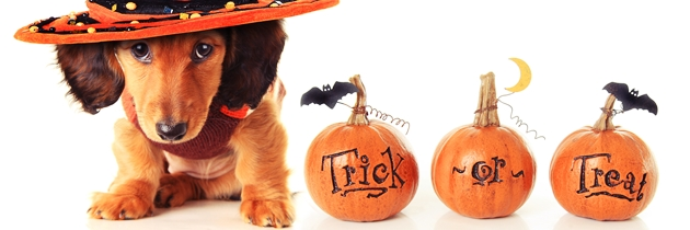 Pet Costumes for Halloweens