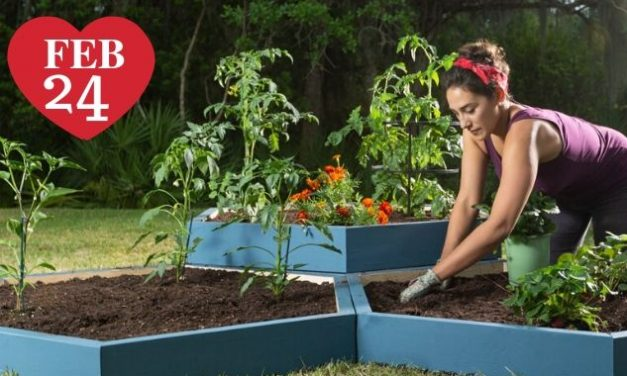 5 Vegetables You Can Grow in 60 Days or Less