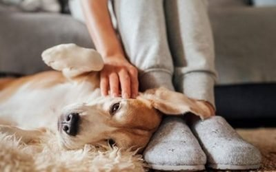 How to Get Rid of Fleas Inside the House Permanently