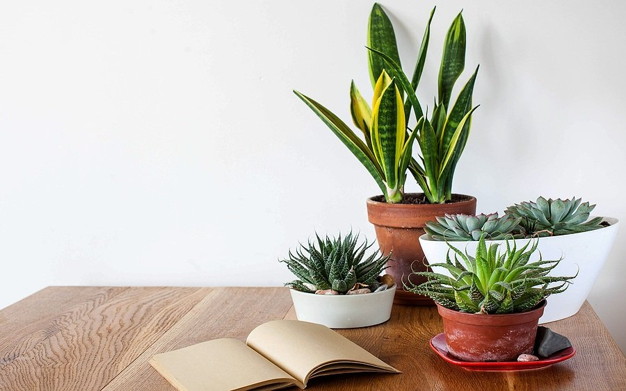 Top 10 Gifts Every Plant Parent Would Love